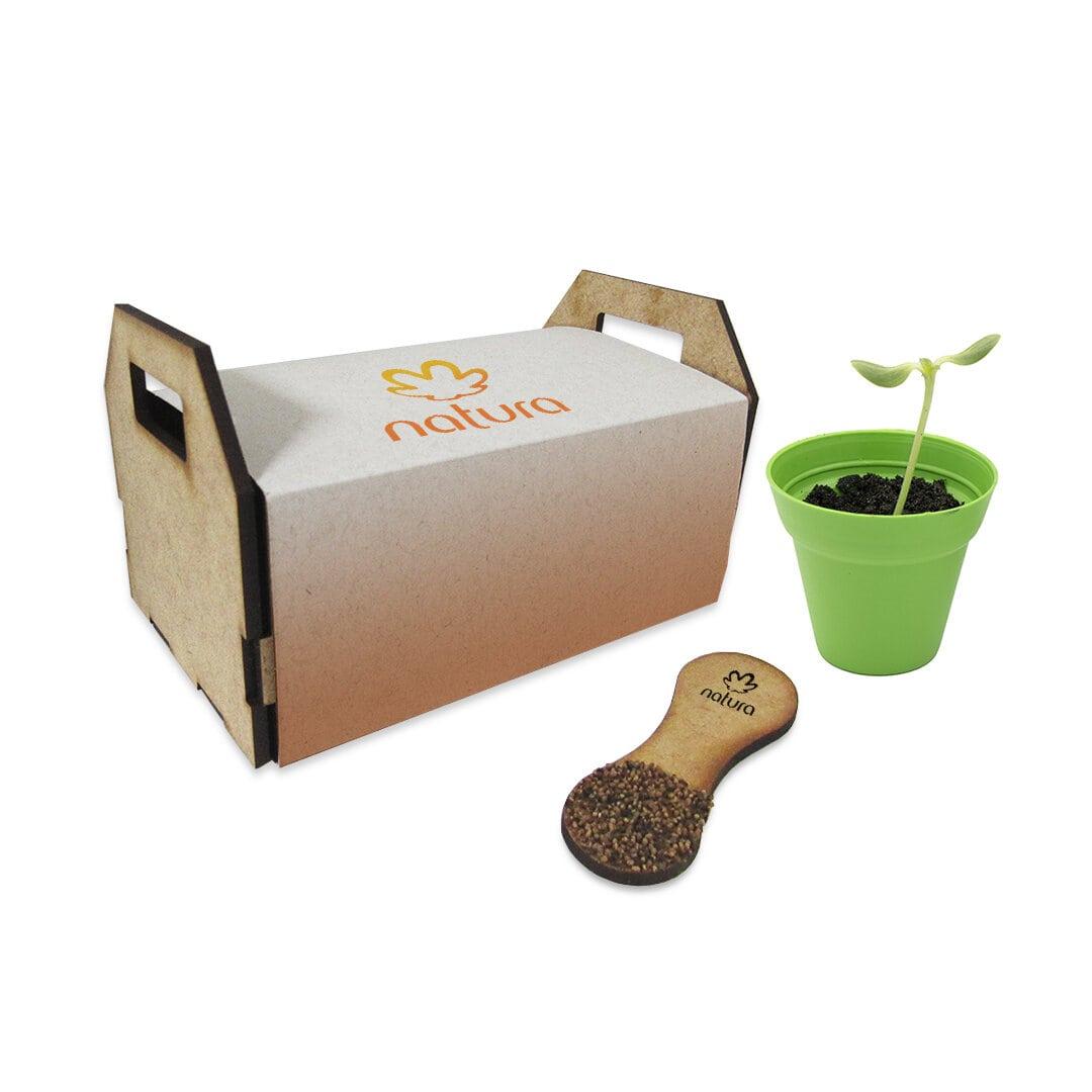 Mini kit horta pazinha