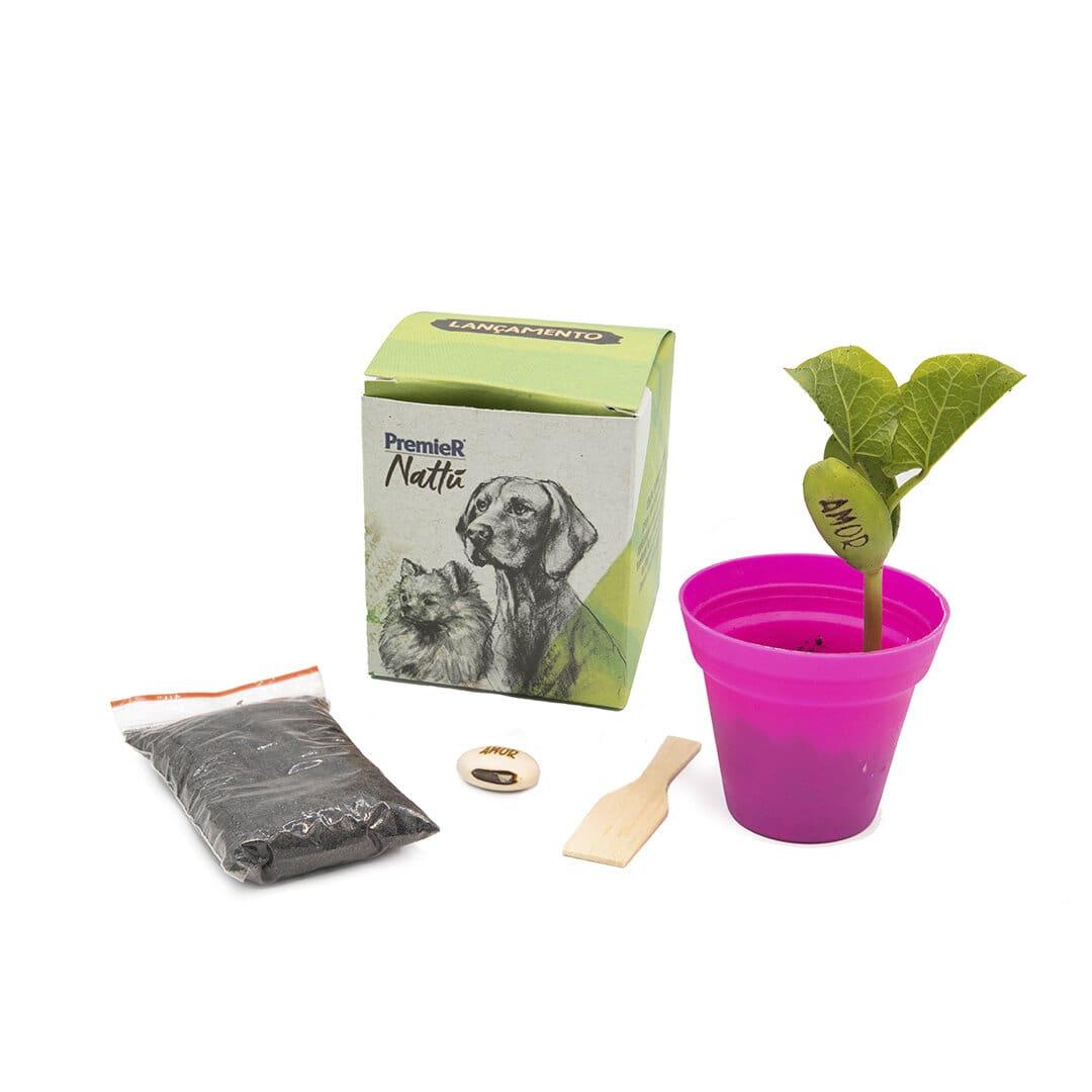 Ecobox com Semente Mágica