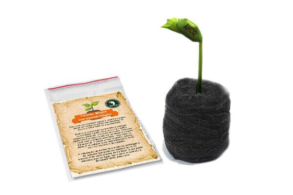 Vasinho Mágico com semente mágica